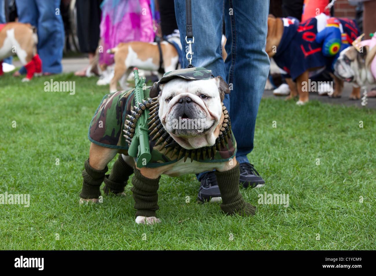 """Bizzarro insolito cane divertente """"fancy dress' Immagini Stock"""