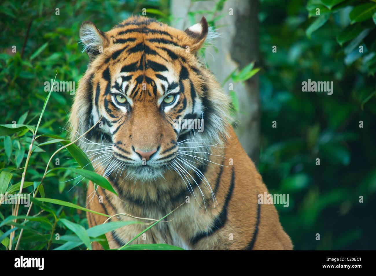 Lo Zoo di Chester, Cheshire, Inghilterra, Regno Unito Immagini Stock