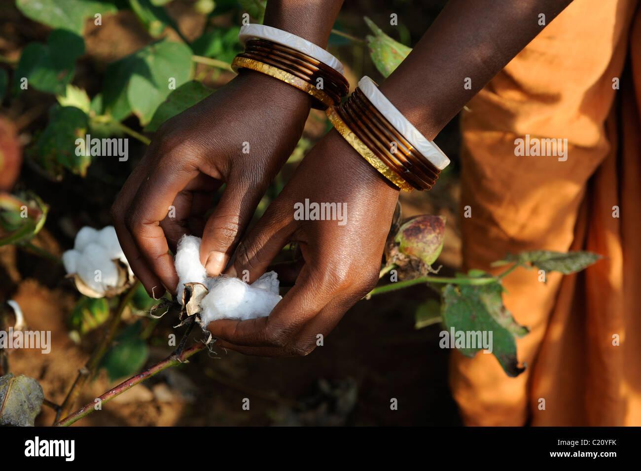 India Orissa , il commercio equo e solidale e di cotone biologico gli agricoltori della cooperativa Agrocel vicino Immagini Stock