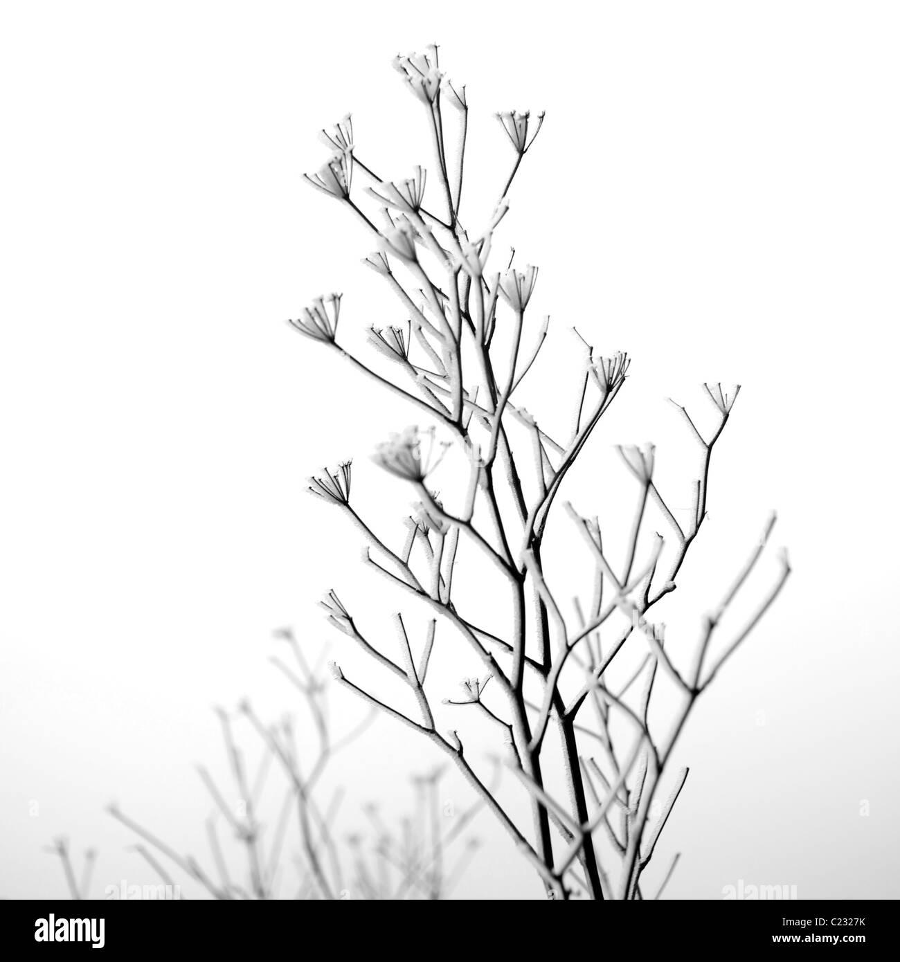 Il ramo con la neve su di esso Immagini Stock