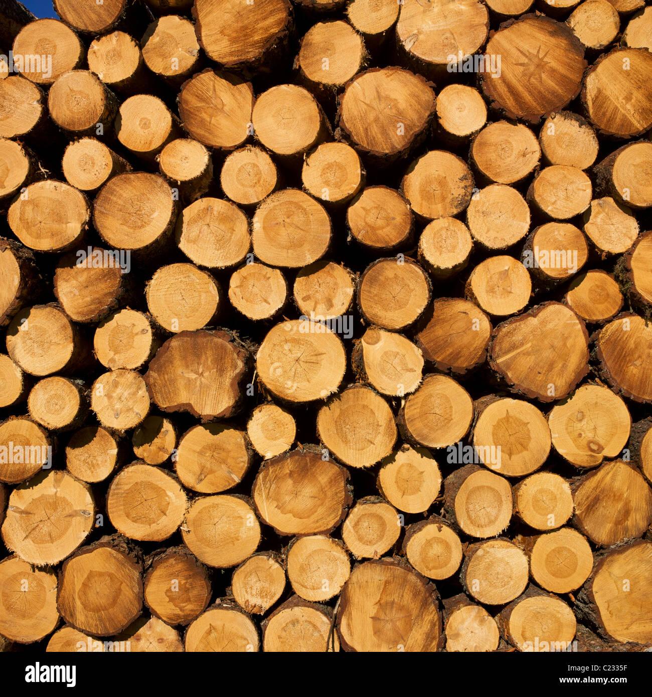 Pila di ciocchi di legna. Immagini Stock