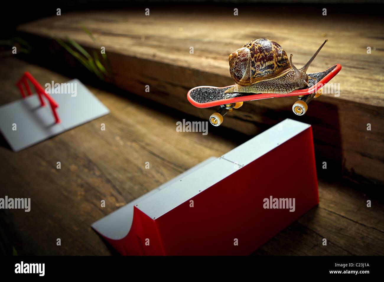 Una lumaca per la corsa su skateboard. Il più veloce della sua regione! Immagini Stock