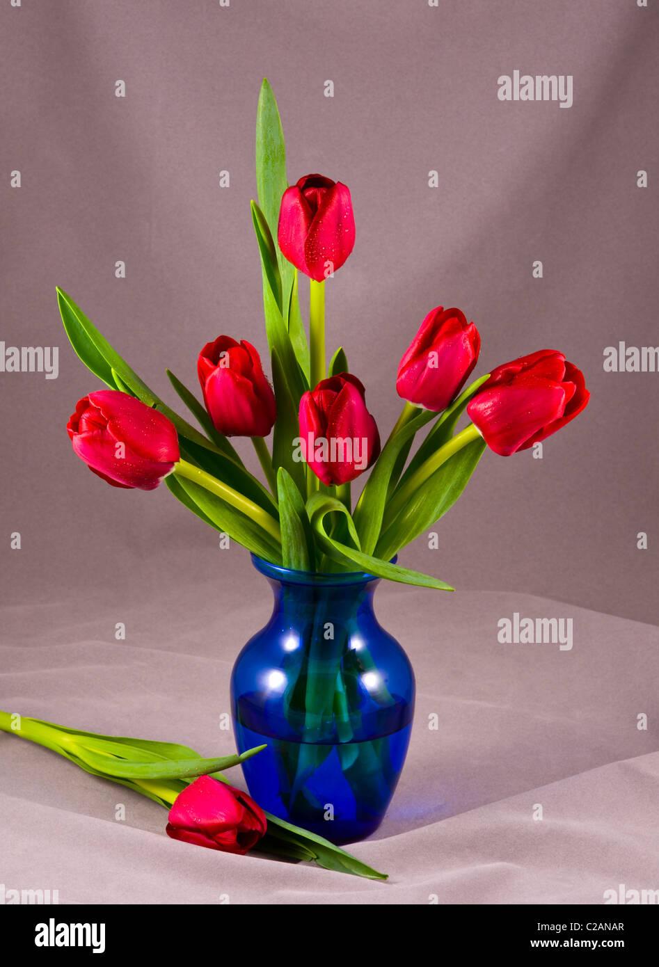 Tulipani rossi in vaso blu gocce di rugiada nebbia acqua composizione fiori disposizione ancora vita table top set Immagini Stock
