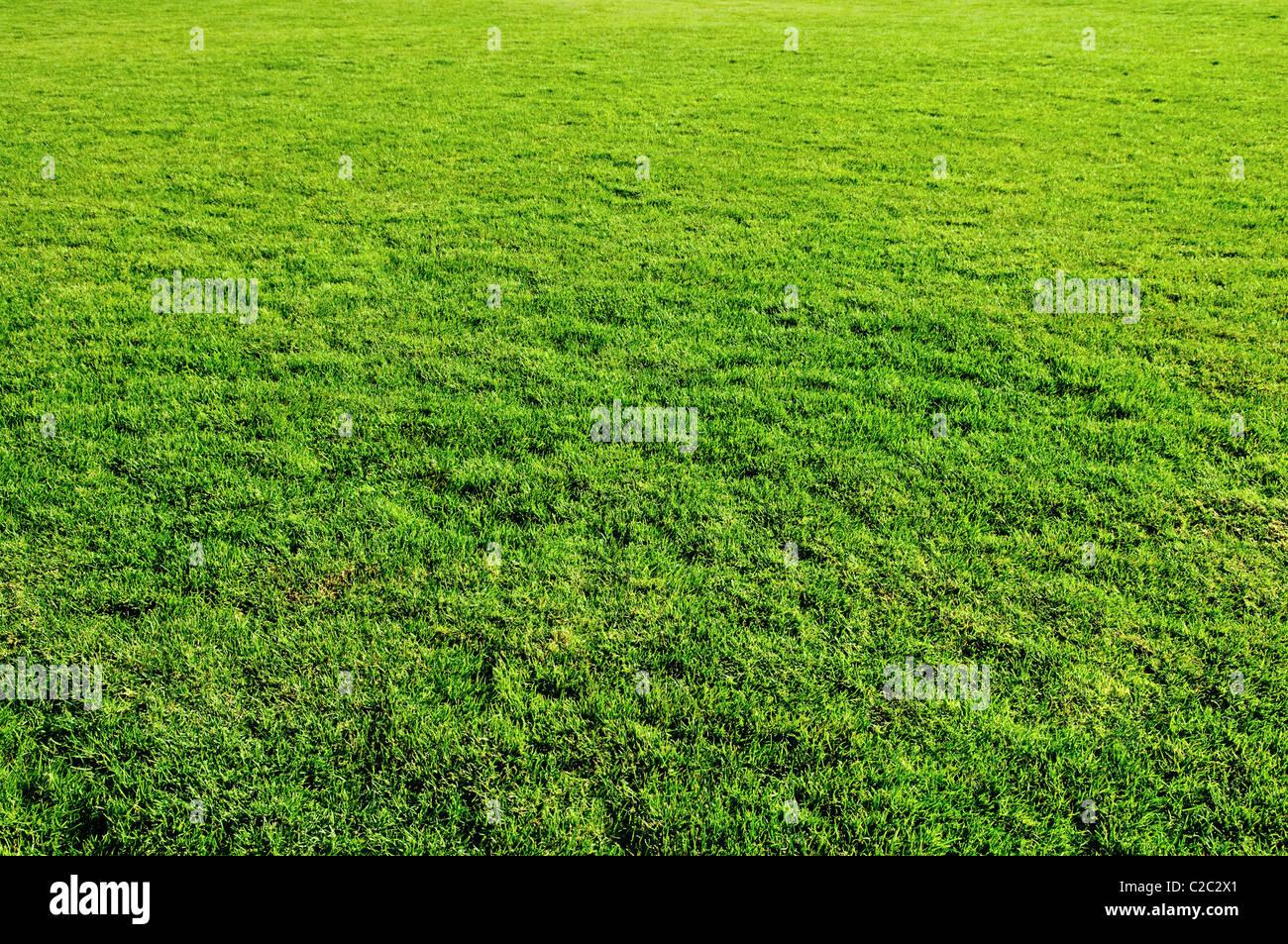 Molla di erba verde prato per la progettazione Immagini Stock