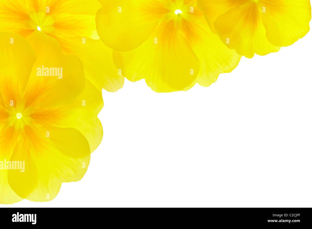 Fiore giallo confine Foto Stock
