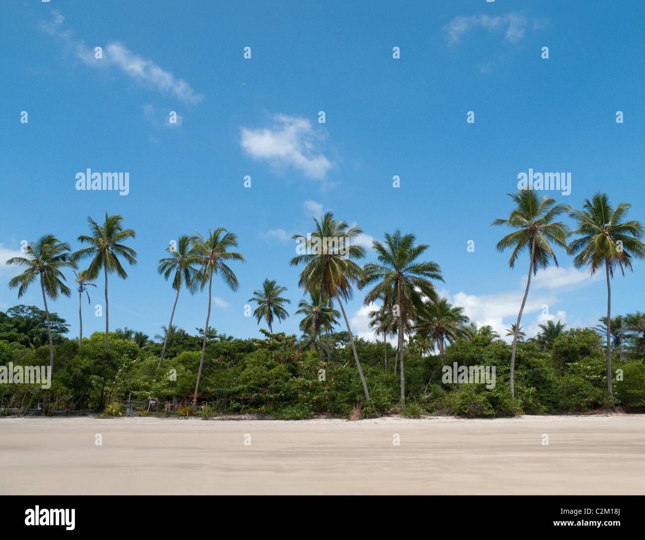 Palme sulla spiaggia, isola di Boipeba, Bahia, Brasile Foto Stock