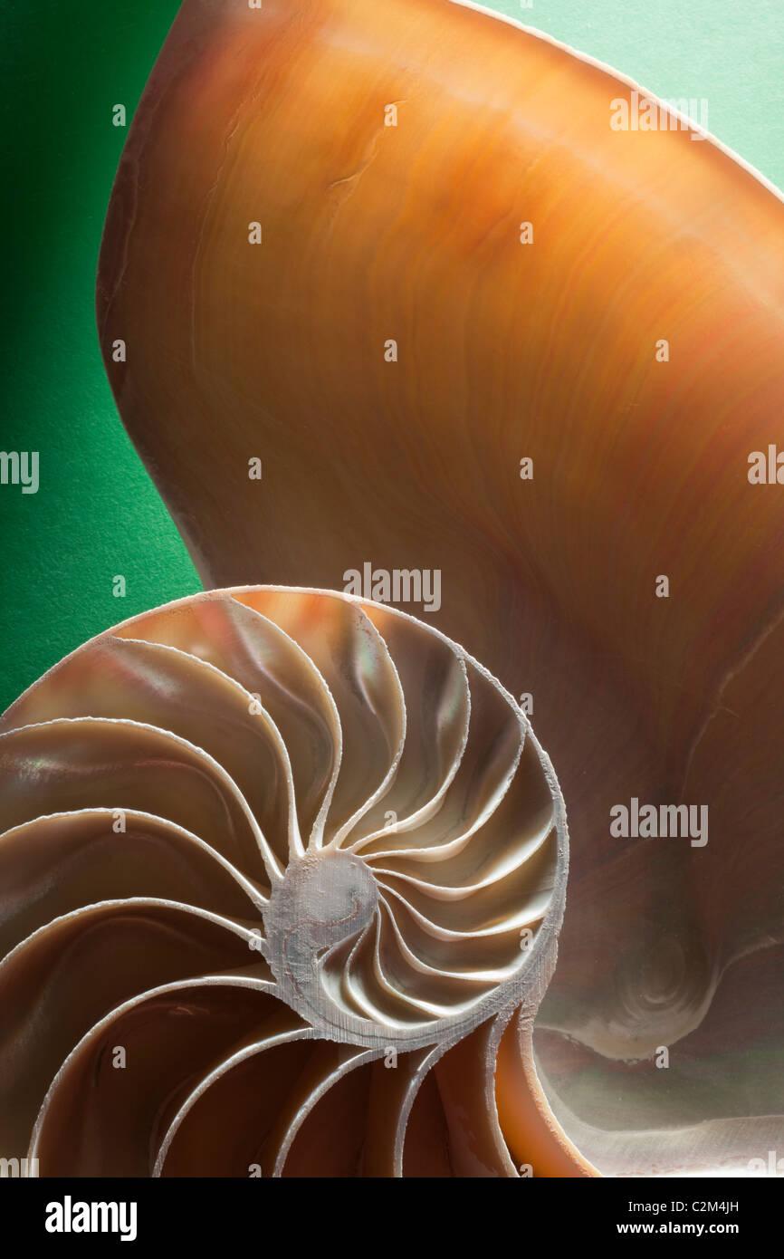 Guscio di crostacei sezione trasversale che rappresenta l'evoluzione della crescita e cambiamento su uno sfondo Immagini Stock