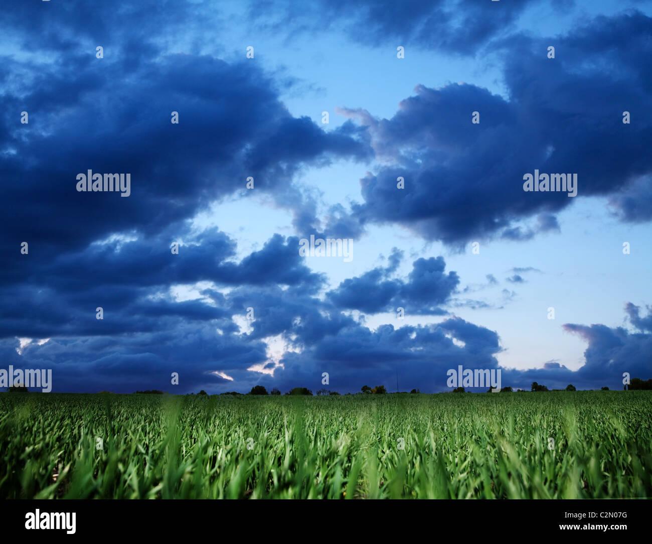 Campo di grano e blu scuro cielo tempestoso. Immagini Stock