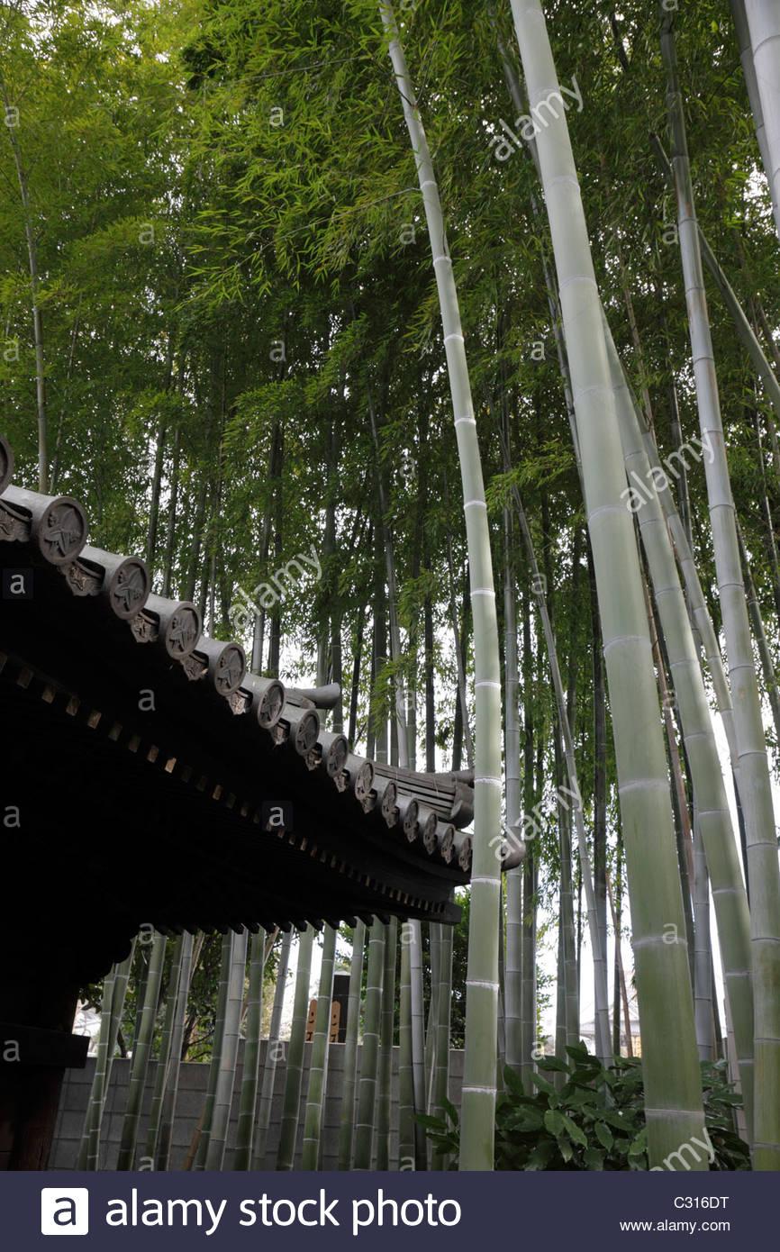 Il vecchio tetto tradizionali piastrelle con un boschetto di bambù crescenti intorno alla casa del Giappone Immagini Stock