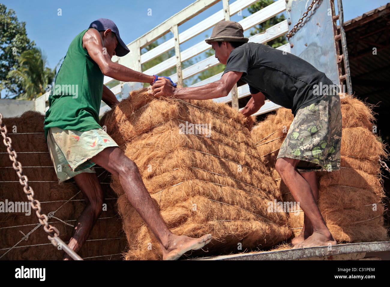 Scarico del bushel, produzione di le fibre di cocco utilizzate nella realizzazione di materassi, BANG SAPHAN, Thailandia, Immagini Stock