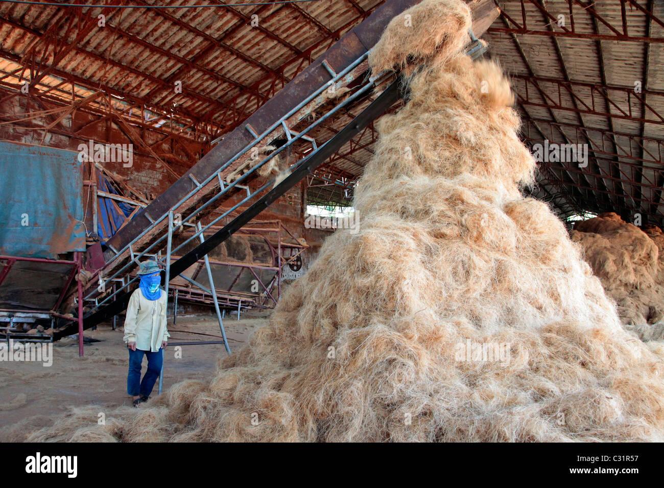 La produzione di fibre di cocco per la realizzazione di materassi, BANG SAPHAN, Thailandia, ASIA Immagini Stock