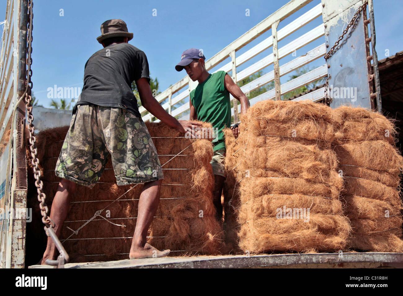 Lo scarico dei fasci, la produzione di fibra di noce di cocco per la realizzazione di materassi, BANG SAPHAN, Thailandia, Immagini Stock