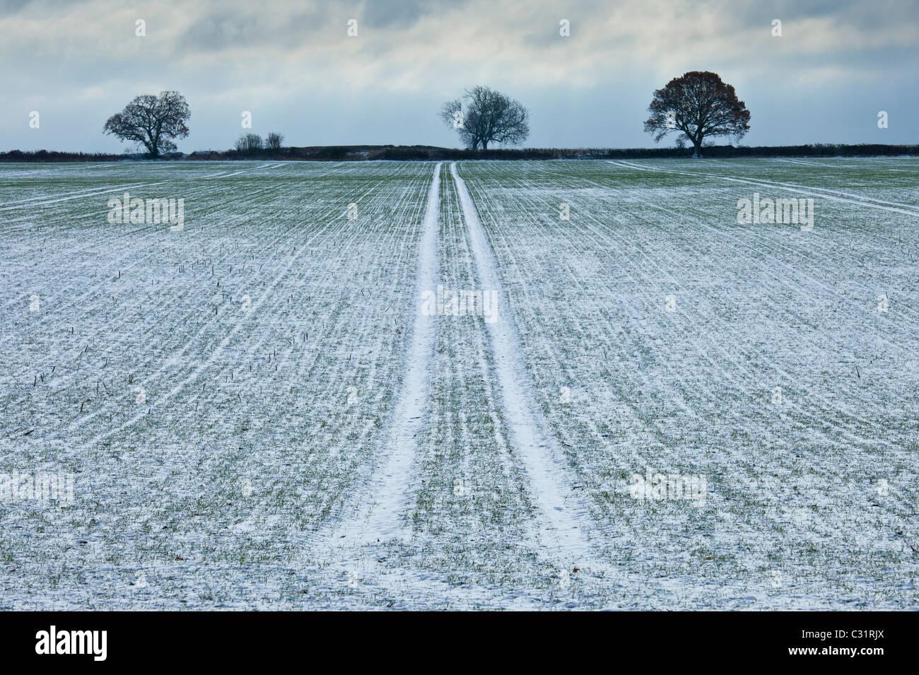 Frosty campo di scena e gli alberi durante la trasformata per forte gradiente gelo in inverno, il Costwolds, REGNO UNITO Foto Stock