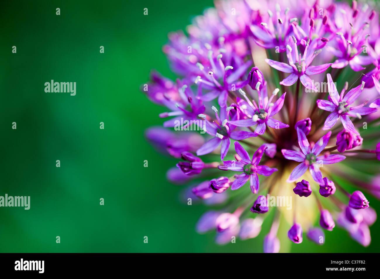 Fiori Colorati Immagini & Fiori Colorati Fotos Stock Alamy