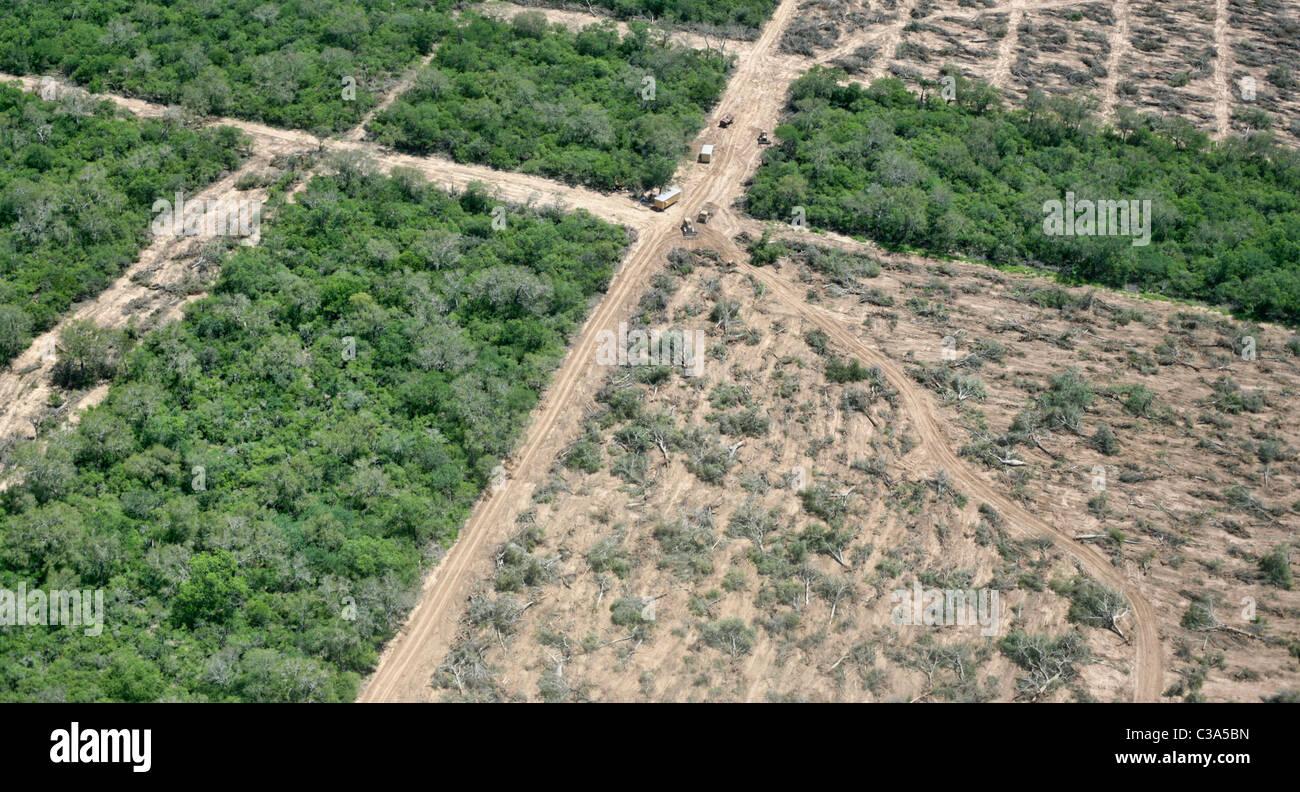 La deforestazione in Gran Chaco vicino a Mariscal Estigarribia, Paraguay Immagini Stock