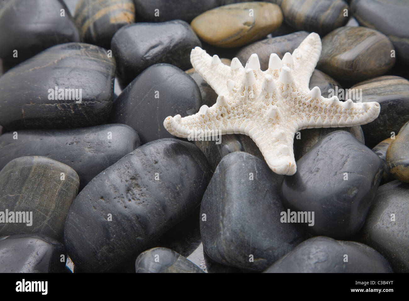 Imbianchiti starfish su una spiaggia ghiaiosa Immagini Stock