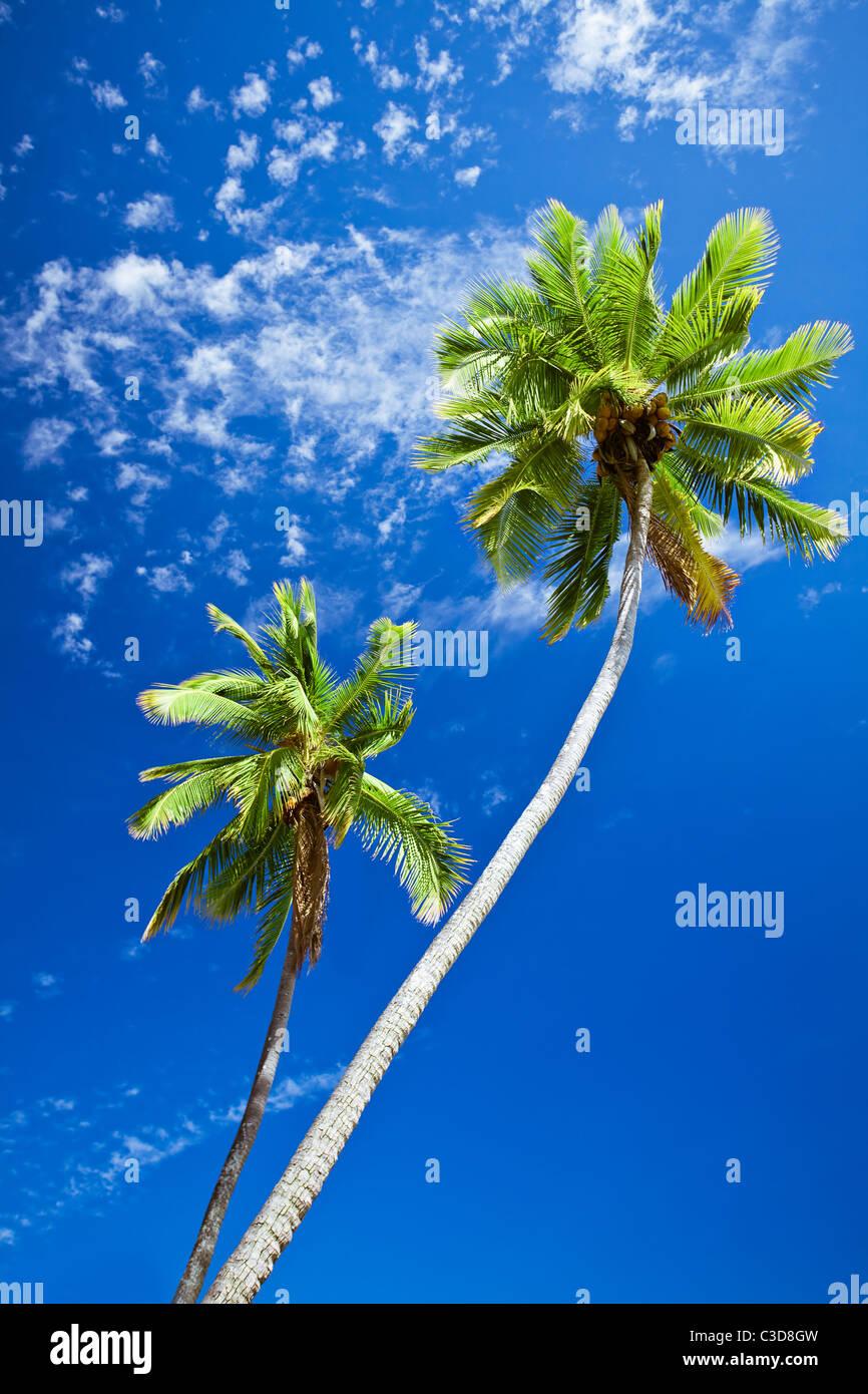 In prossimità di alberi di palma contro sunny blue sky Immagini Stock