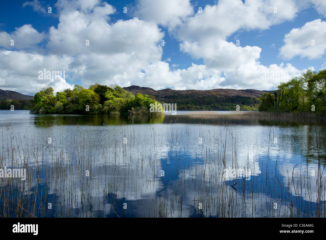 Estate riflessioni, Lough Gill, nella contea di Sligo, Irlanda. Immagini Stock