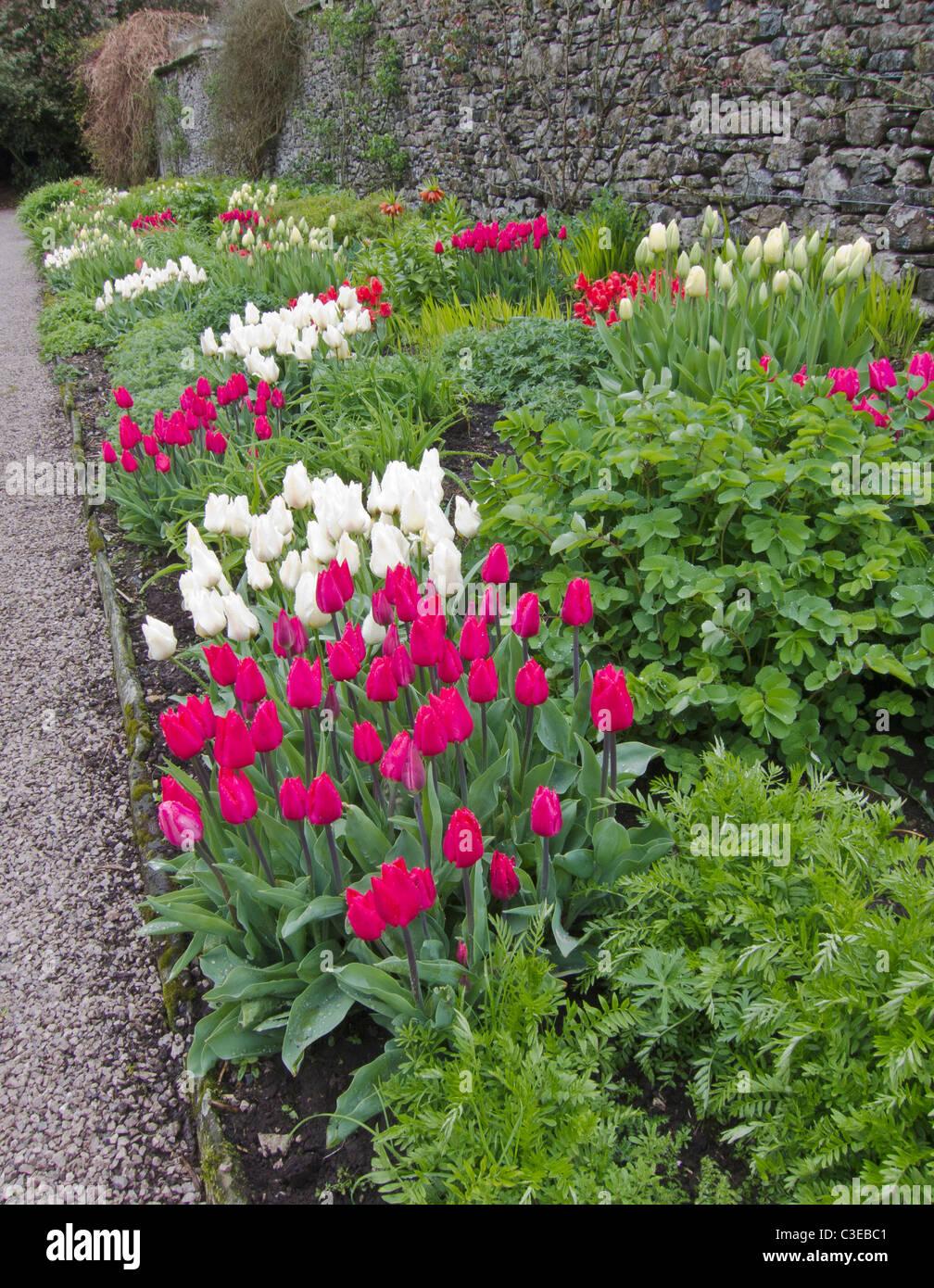 Flower confine con i tulipani, Giardino Inglese, Inghilterra, Regno Unito. Foto Stock