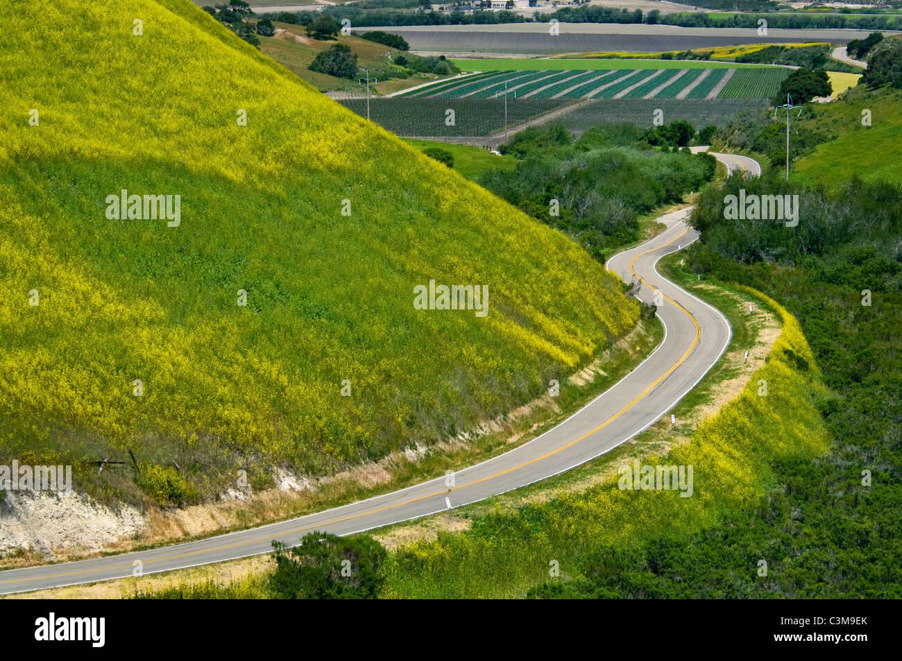 Paese le curve della strada attraverso le verdi colline e agricoltura valle è primavera, nei pressi di Lompoc, Immagini Stock