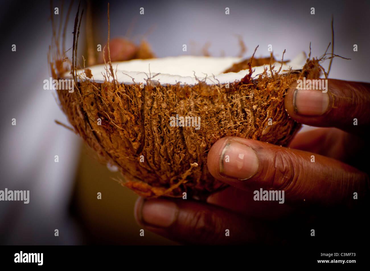 Cameriere Fijiano che serve appena spaccata di latte di cocco, Malolo Resort, Isole Mamanucas, Isole Figi Immagini Stock