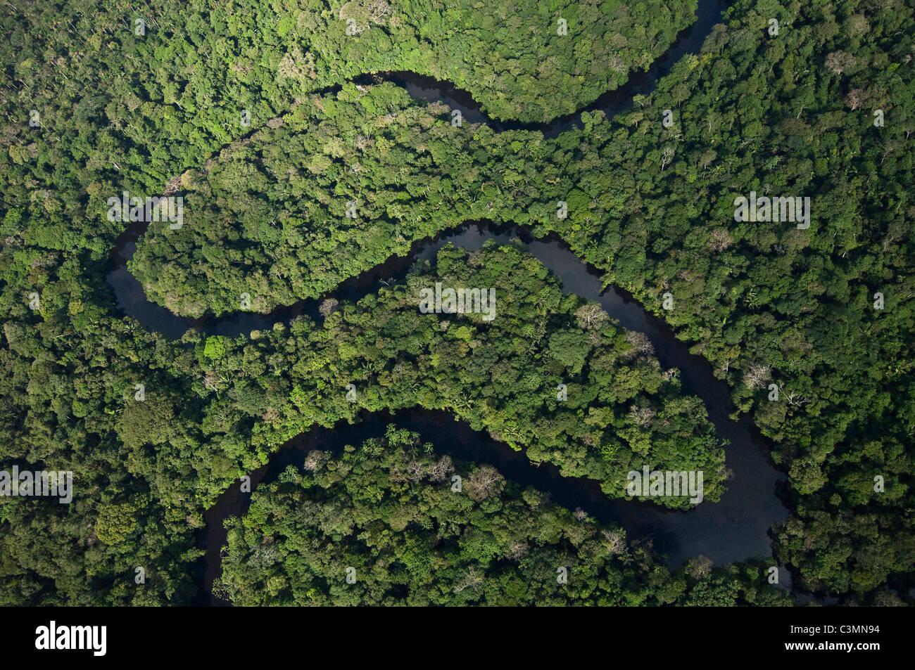Serpeggiante fiume nella Riserva Cuyabeno., Amazonasregenwald. Immagini Stock