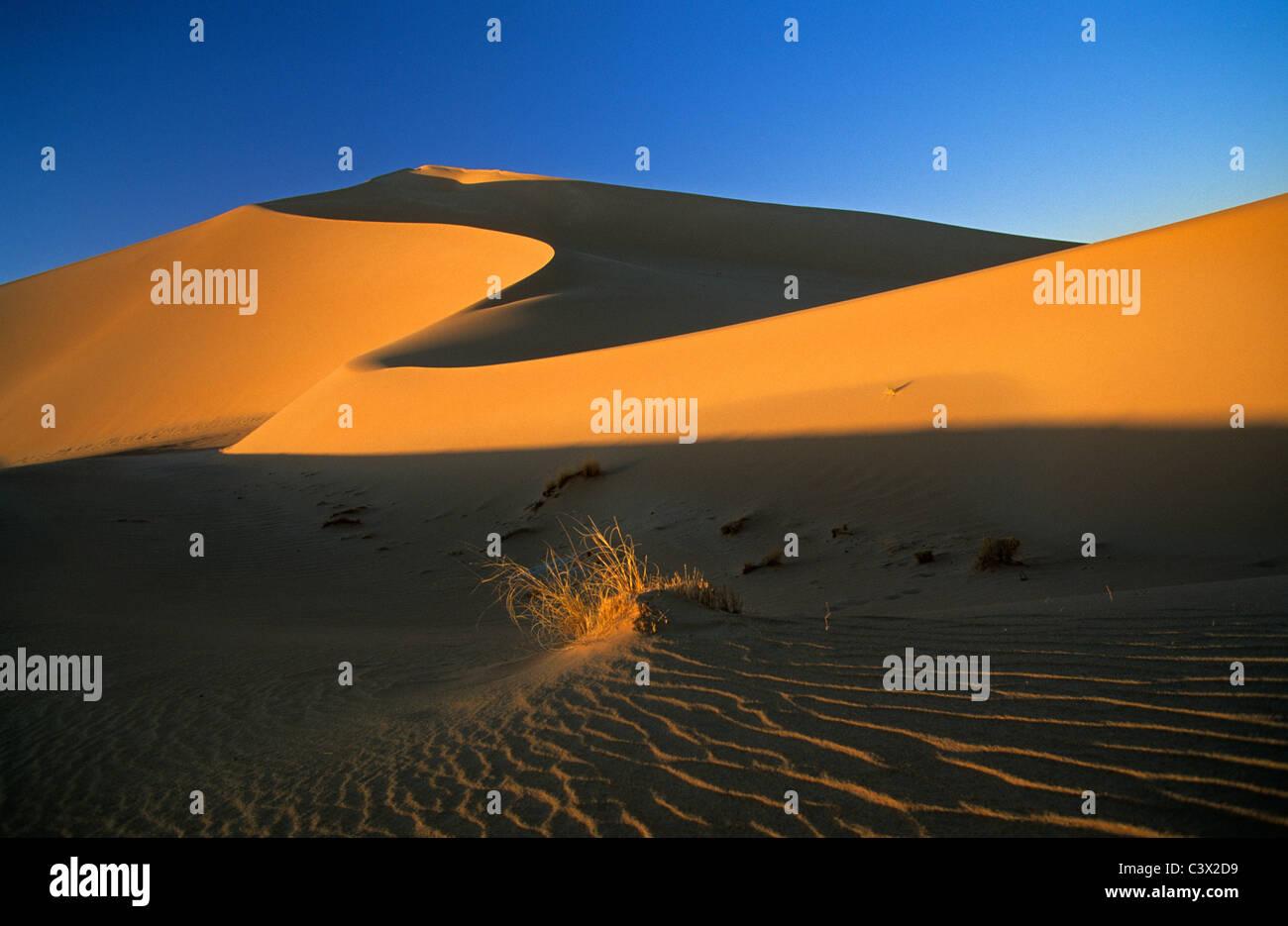 Algeria, Djanet, Sahara dessert, piante sopravvissute in sabbia. Le dune di sabbia. Immagini Stock