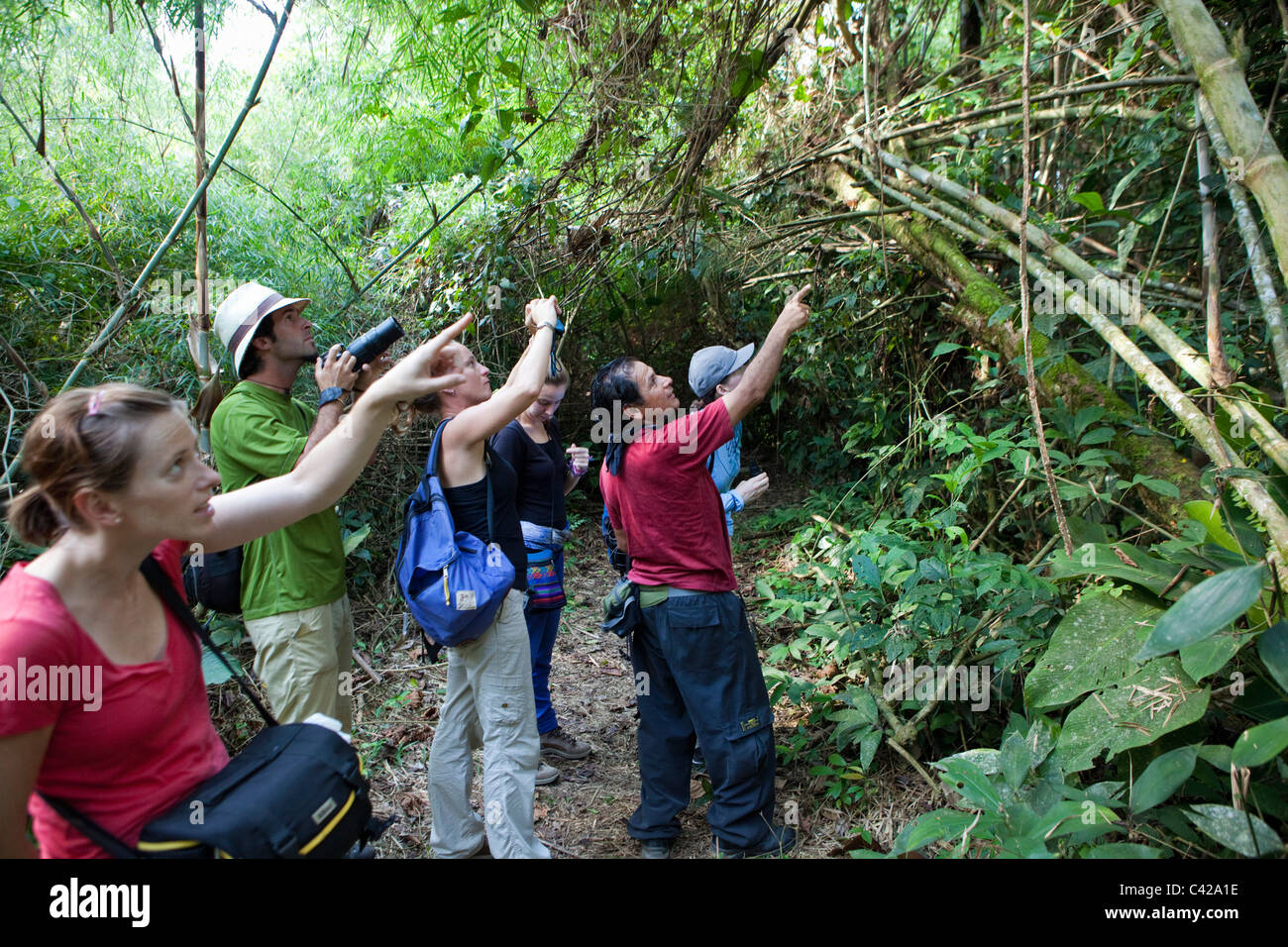Il Perù, Cruz de Mayo, il Parco Nazionale del Manu, Sito Patrimonio Mondiale dell'UNESCO, Pantiacolla montagne. Immagini Stock