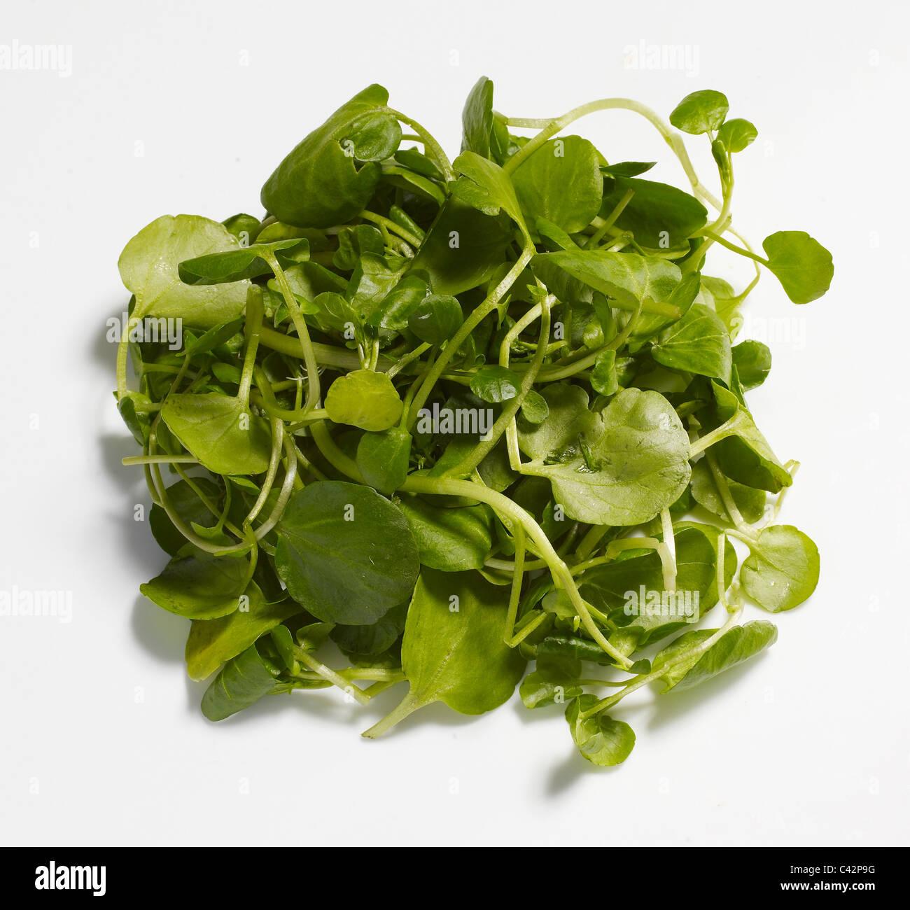 Crescione Foto Stock