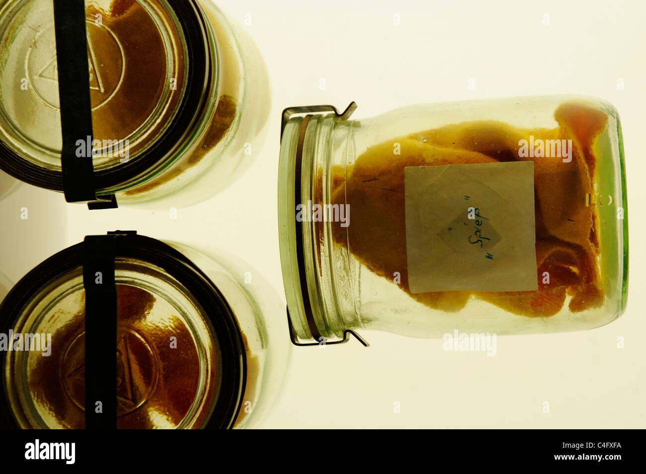 Human odore di sudore campioni in vasetti di vetro in stasi Museum di Berlino Est Immagini Stock