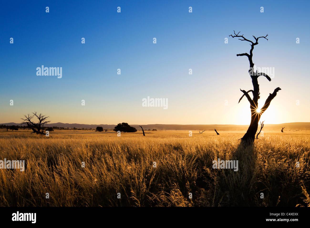 Scenario che mostra l'ecologia unica di sud-ovest il deserto del Namib o pro -Namib. NamibRand Riserva Naturale, Foto Stock