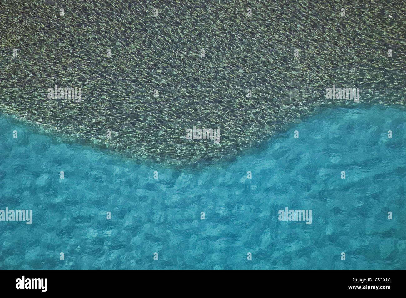 Grande scuola di pesce Florida Costa Orientale Immagini Stock
