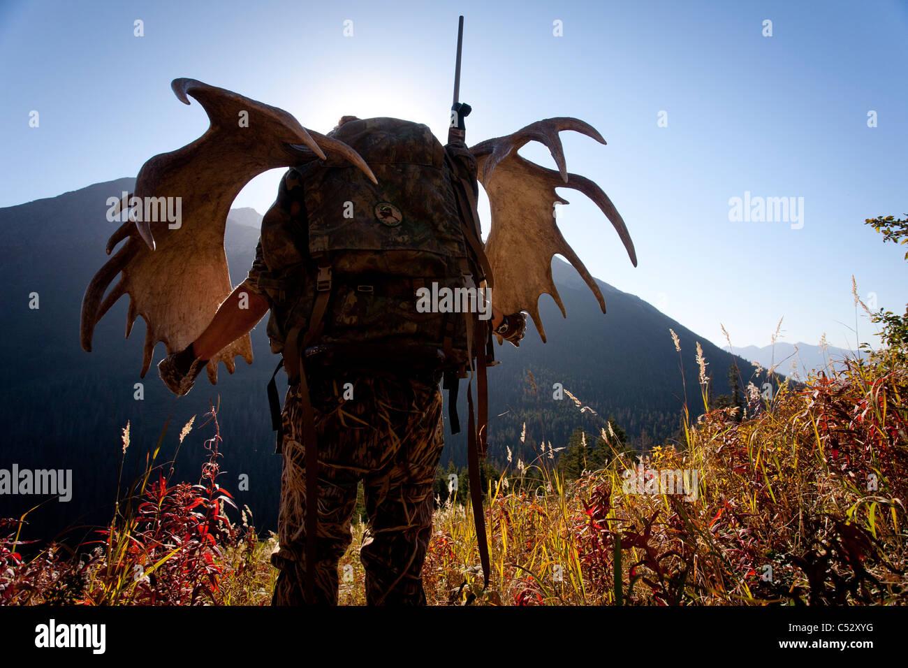 Moose hunter porta a grandi corna di alce cremagliera come egli escursioni fuori dalla caccia, bird Creek area di Immagini Stock