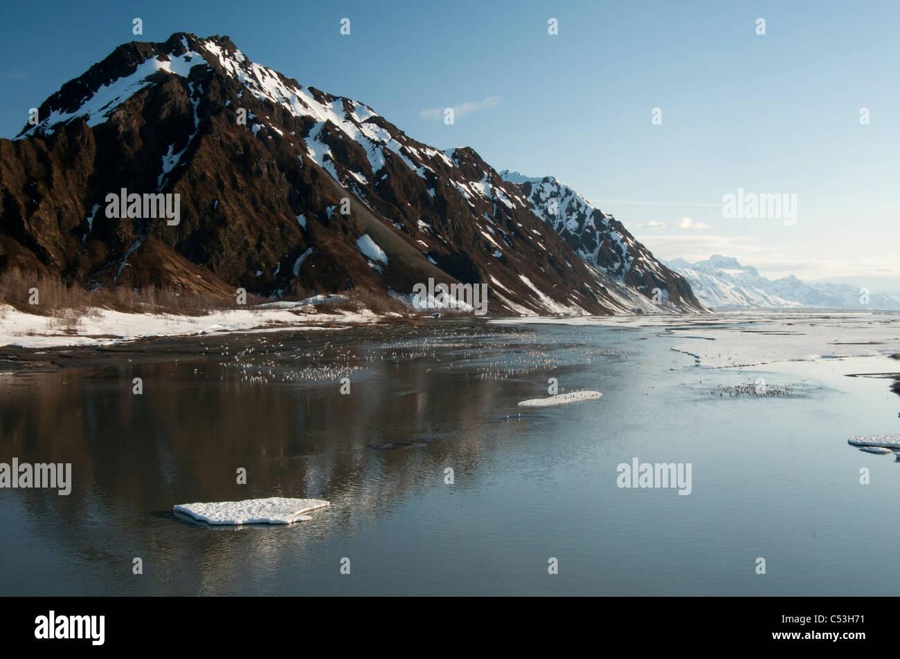 Molla ghiaccio e migliaia di gabbiani raccogliere sul rame fiume vicino a punto di bandiera, Chugach National Forest, Immagini Stock