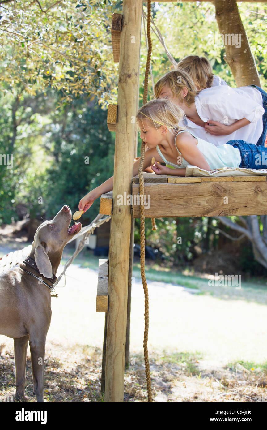 Bambini alimentando un cane da tree house Foto Stock