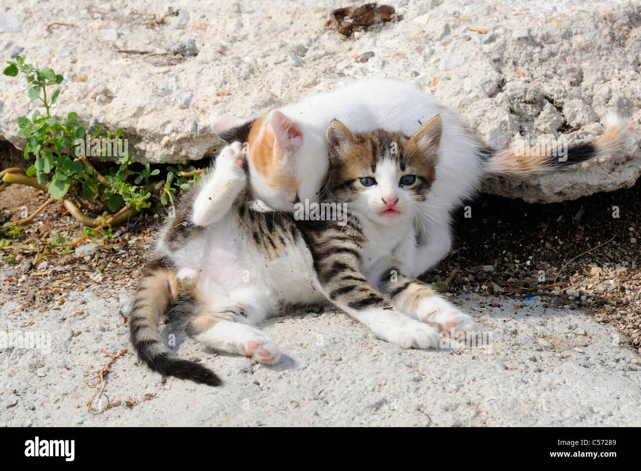 2 lesbiche mangiare un micio