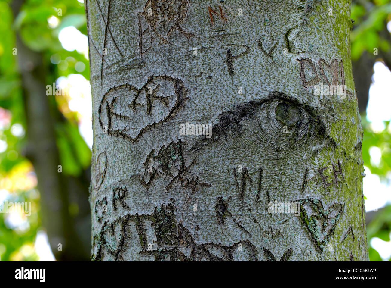 Close-up di espressioni di amore sul tronco di albero Immagini Stock