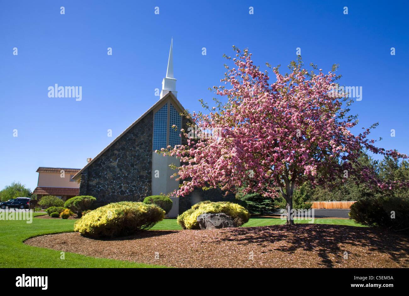 Una chiesa battista incorniciata da un granchio melo in curva, Oregon Immagini Stock