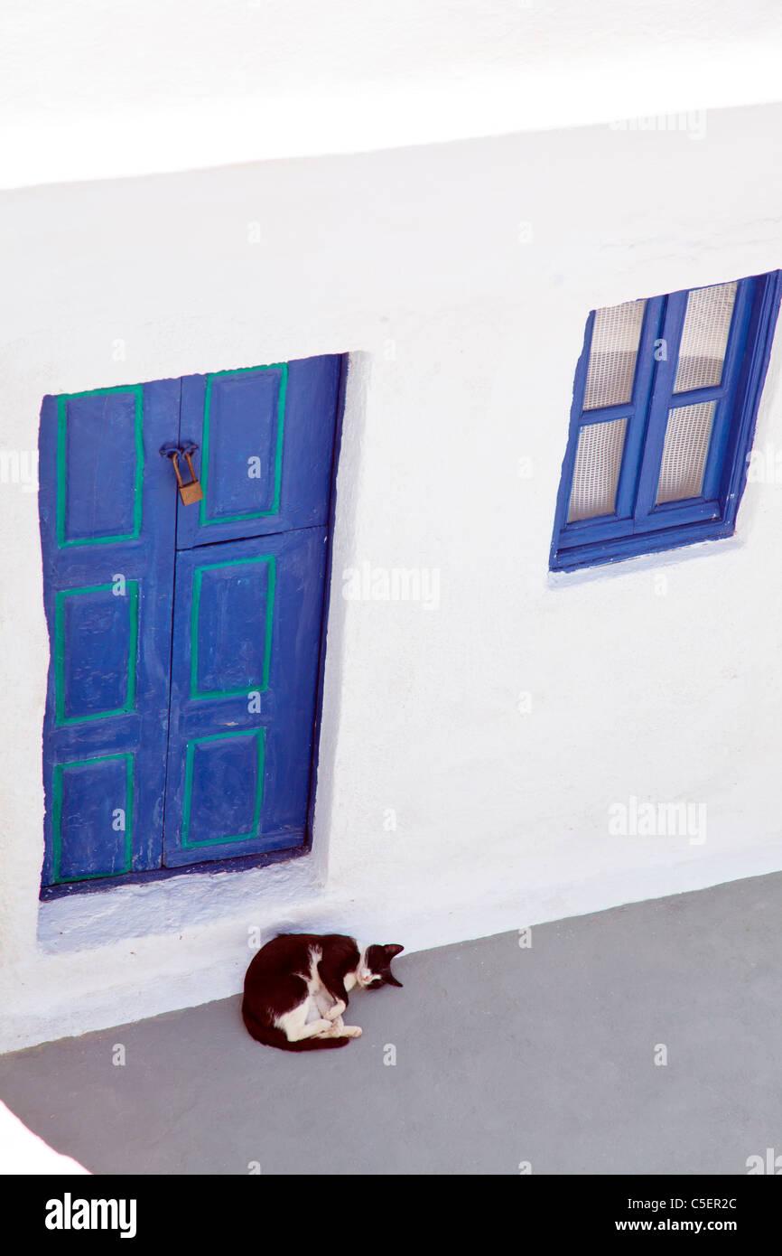Oia - Santorini, isola greca, la Grecia, l'Europa in bianco e nero cat riccioli fino sotto lo sportello blu Immagini Stock
