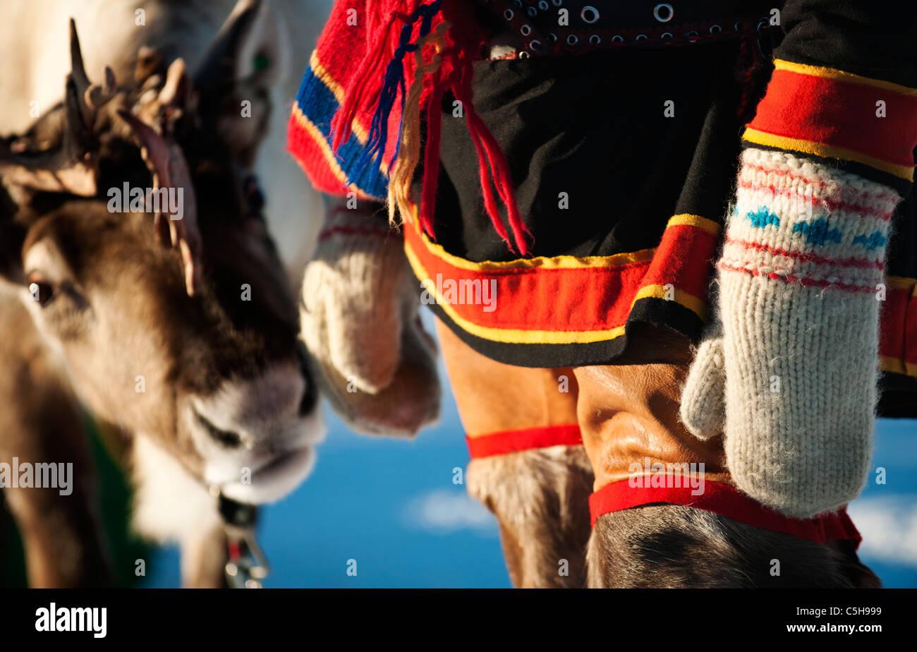 Sami e renne, Lapponia, Finlandia Immagini Stock