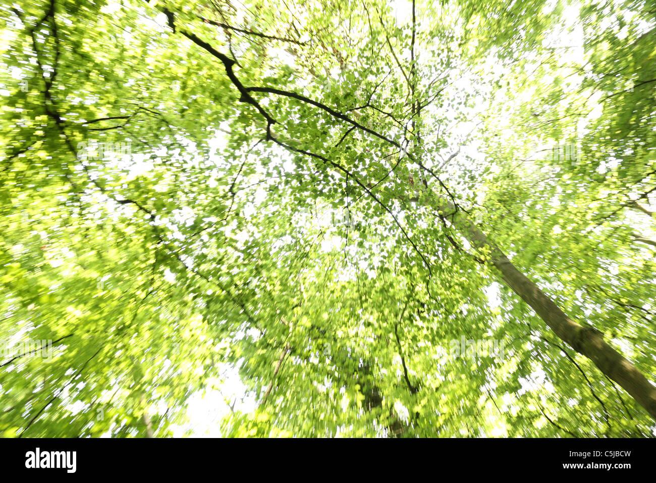 Pezzata splendente di luce solare attraverso la campagna inglese. Immagini Stock