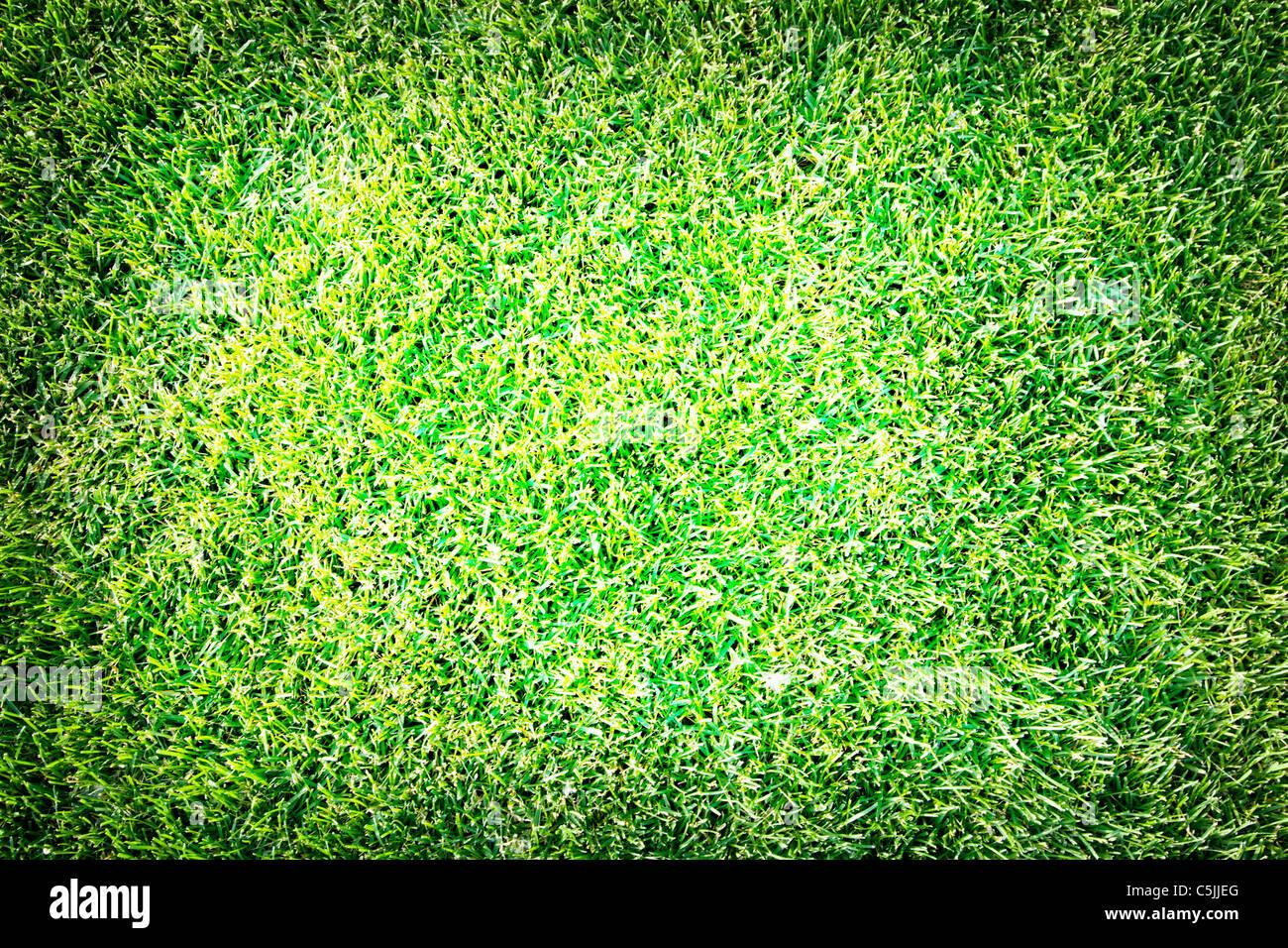 Immagine ravvicinata di fresh spring geen erba. Immagini Stock