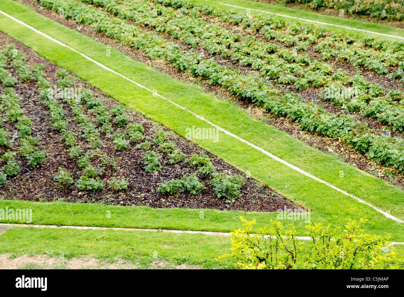 Forma angolo di modo di erba in giardino verde dalla vista in elevazione Immagini Stock