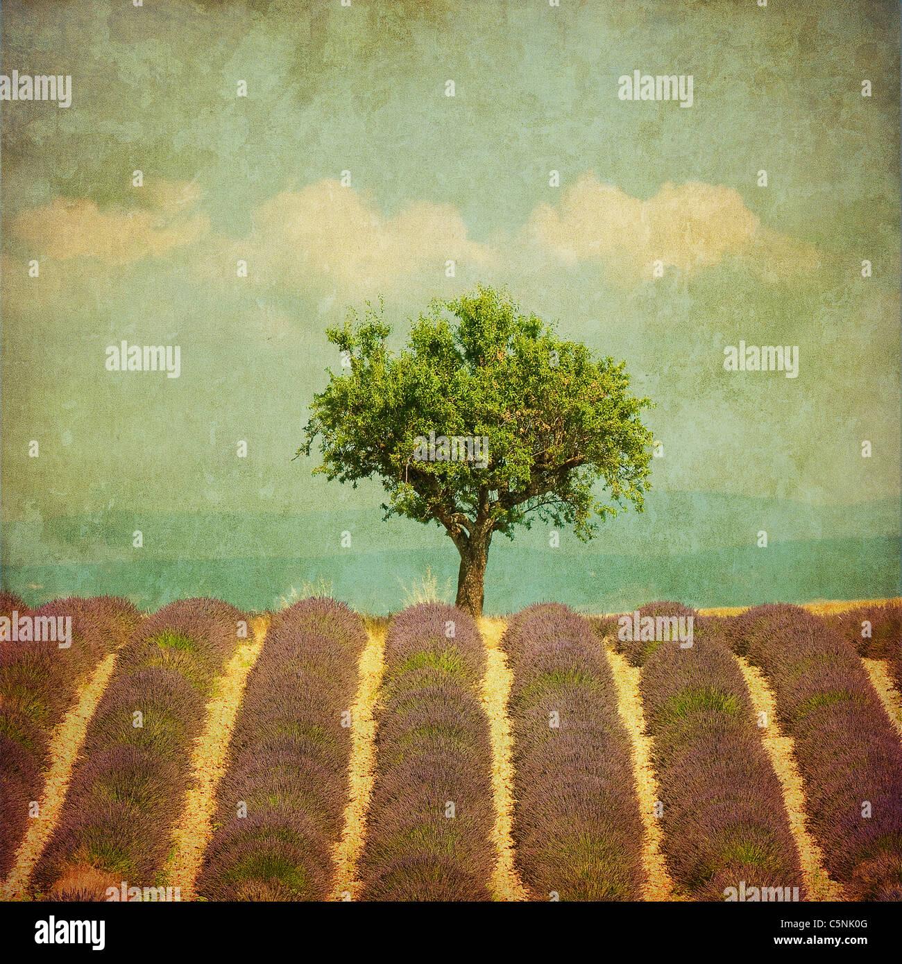 Immagine vintage di un albero in campo di lavanda Immagini Stock