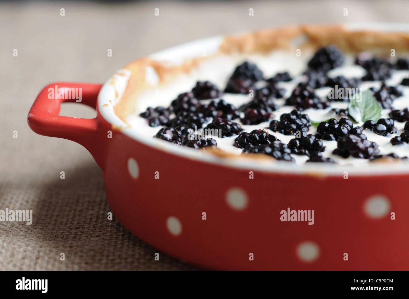 Blackberry tarte Immagini Stock