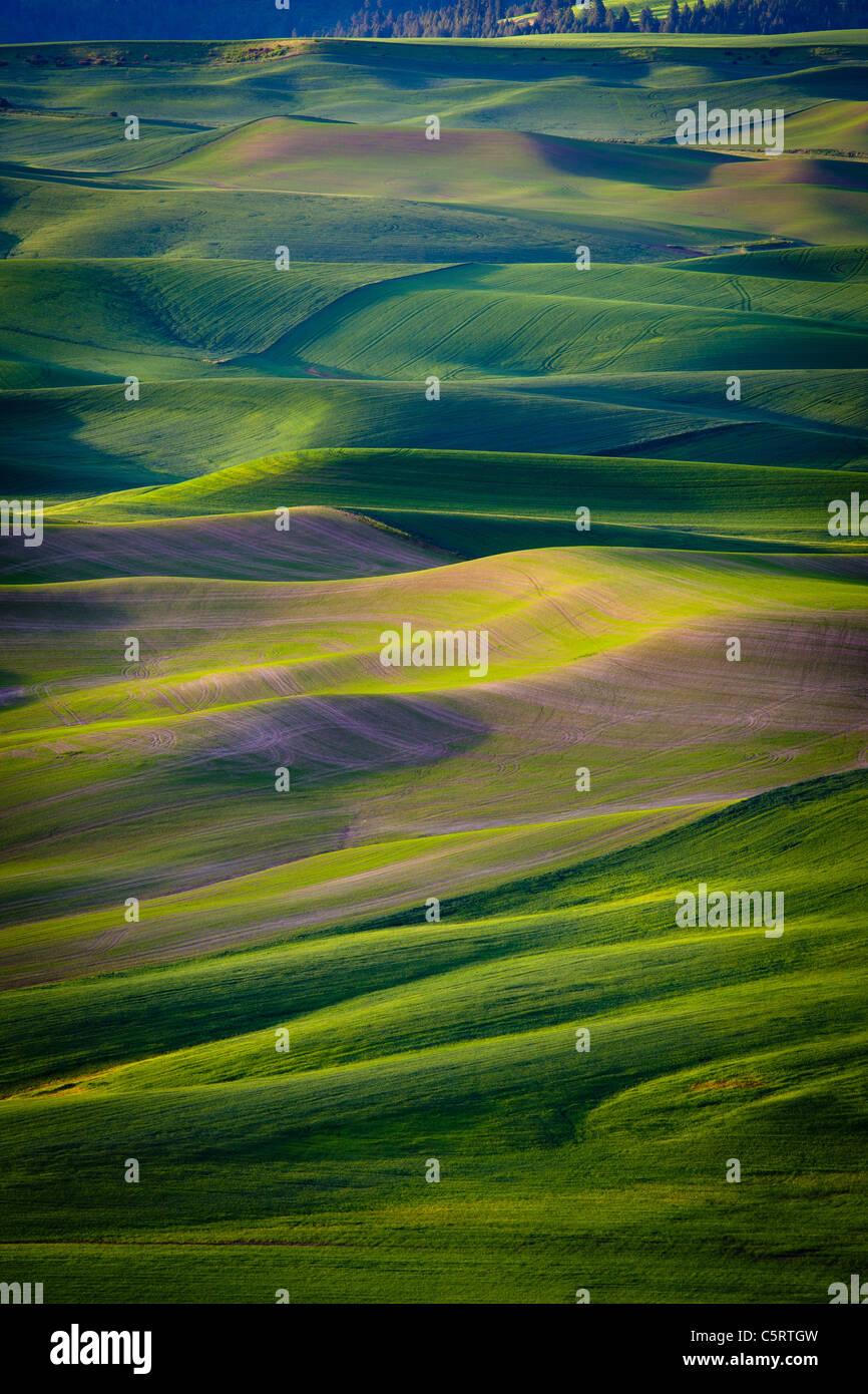 Il rotolamento Palouse paesaggio come visto da Steptoe Butte parco dello stato nello stato di Washington, USA Immagini Stock