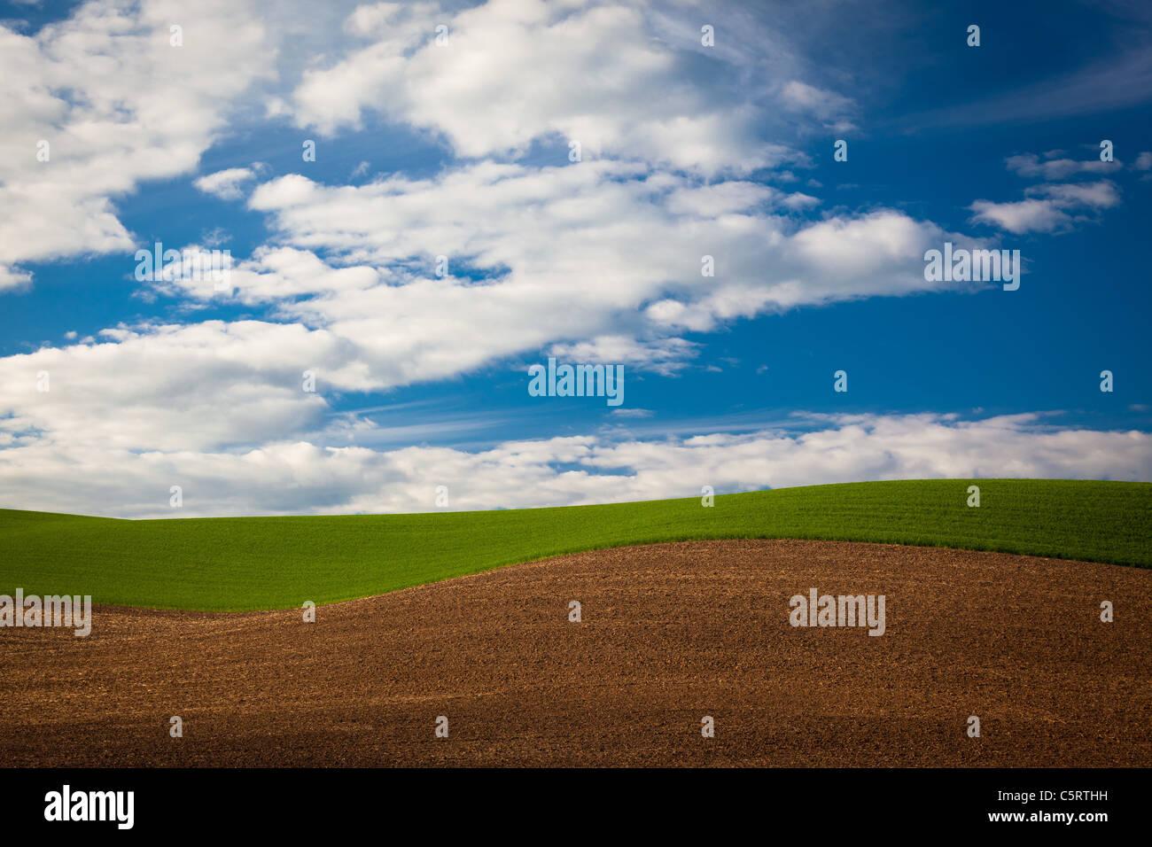 Paesaggio della Palouse area agricola dello stato di Washington orientale, STATI UNITI D'AMERICA Immagini Stock