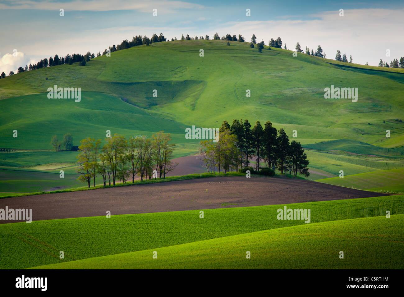 Paesaggio Palouse Immagini Stock