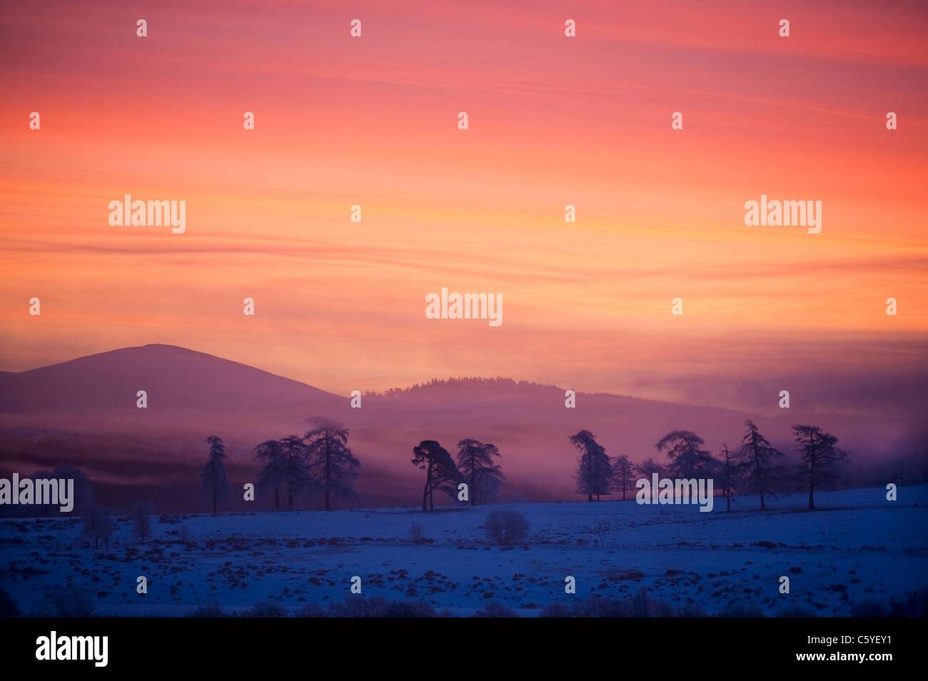 Alba sulle colline Cromdale su inverni di mattina. Cairngorms National Park, Scozia, Gran Bretagna. Immagini Stock