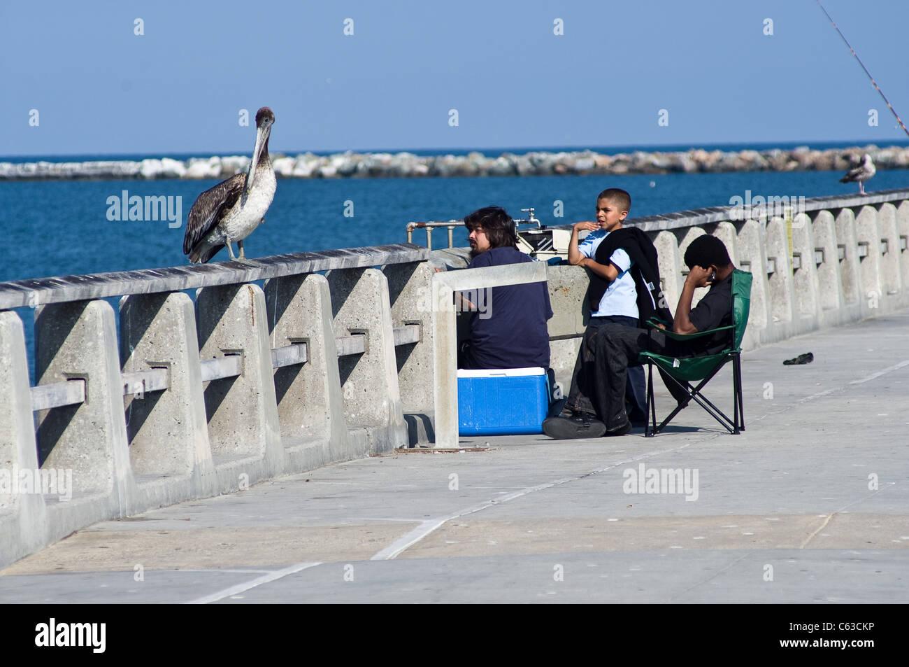 Cormorano appollaiato vicino alle persone in Los Angeles Immagini Stock